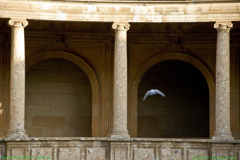 Granada - columns in the Palace of Charles V photo